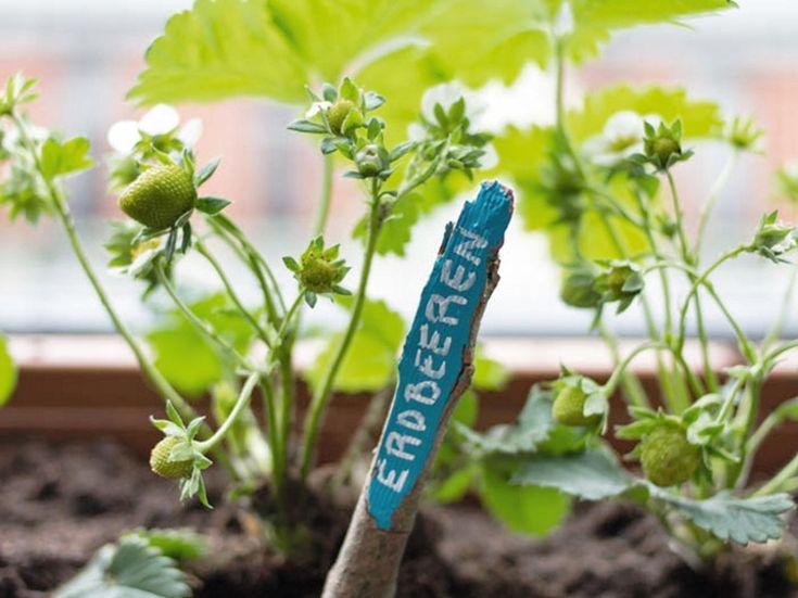DIY Etiquettes pour plante