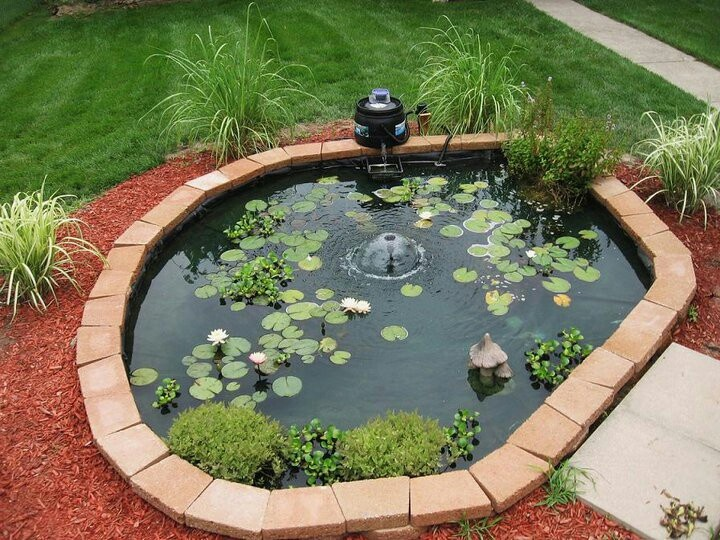 17 best images about goldfish ponds on pinterest the for Outdoor goldfish pond ideas