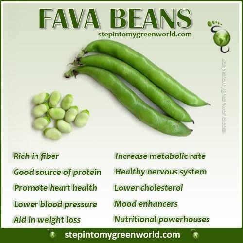 Fava beans health benefits