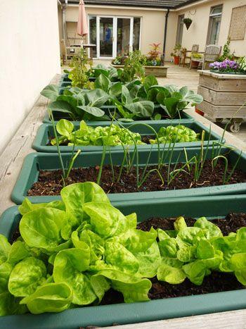 vegetable garden on the patio at our cork nursing home. Interior Design Ideas. Home Design Ideas
