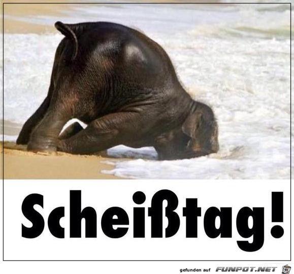 lustiges Bild 'Schei sstag.jpg'- Eine von 25328 Dateien in der Kategorie 'witzige Bilder' auf FUNPOT.