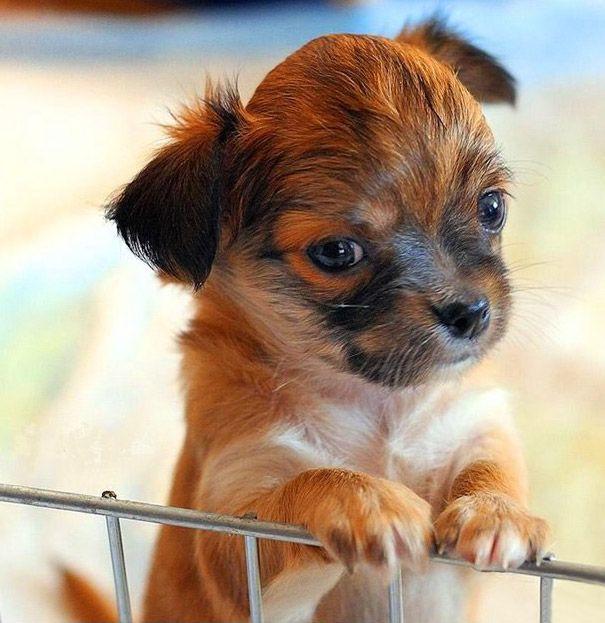 Its a cute puppy!!