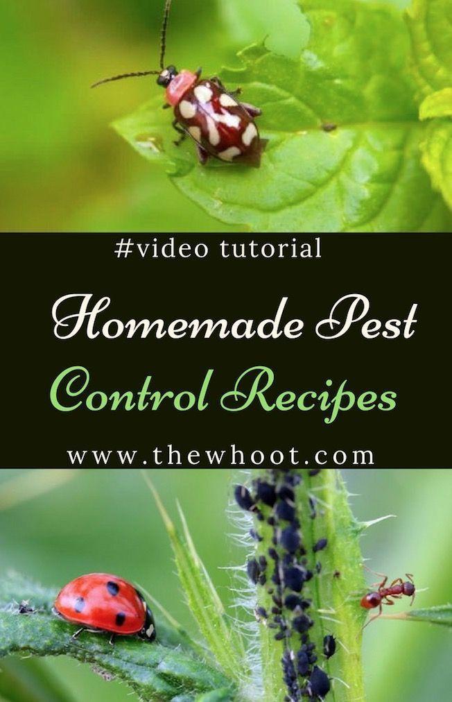 Homemade Pest Control Recipes Video Instructions Garden Pest Control Insect Spray Pest Control