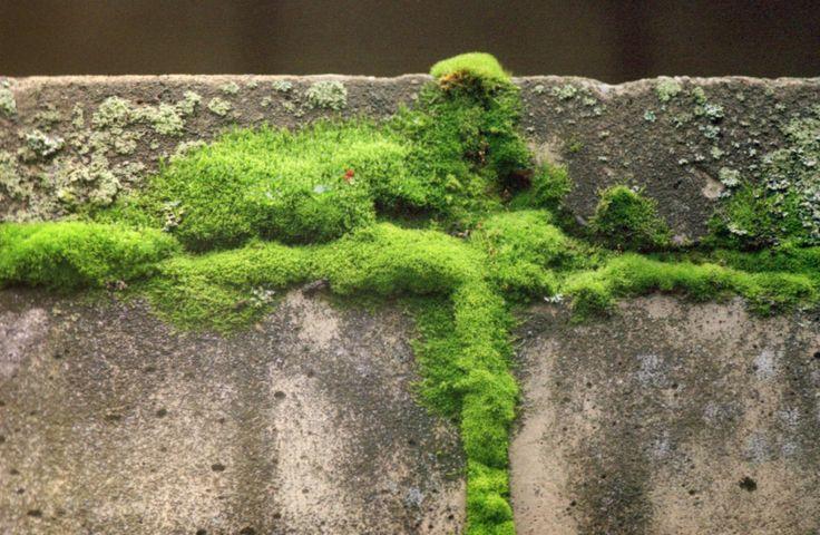moss, мох, пленка