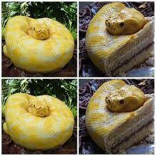 Bolo de Cobra-Considerado um dos bolos mais estranhos do mundo :I