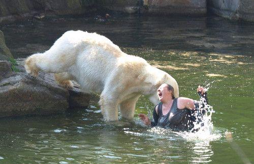 scary polar bears - Bing Images  3ad1c2314