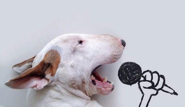 dog-art-17
