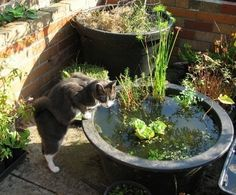 17 Best Images About Cat Friendly Garden On Pinterest