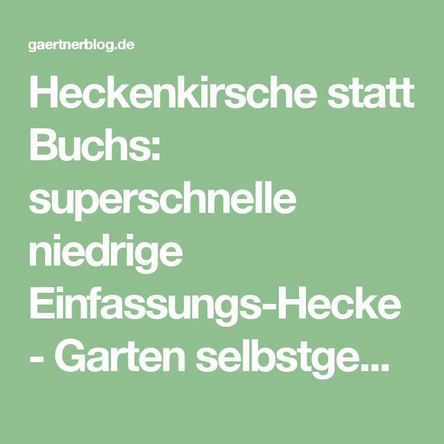 Heckenkirsche statt Buchs: superschnelle niedrige Einfassungs-Hecke - Garten selbstgemacht! - Gartenblog