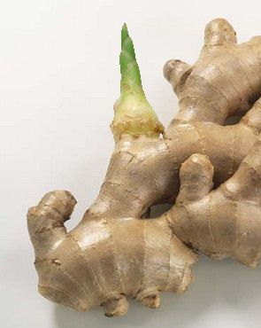 How to grow ginger in a pot