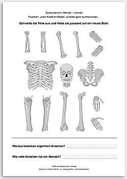 Sachunterricht Mensch Umwelt Puzzle Menschliches Skelett Nr 6 Gif
