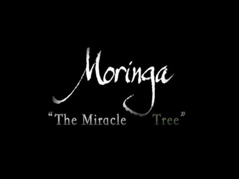 """Discovery Channel Documentary - Moringa Oleifera """"Miracle Tree"""""""