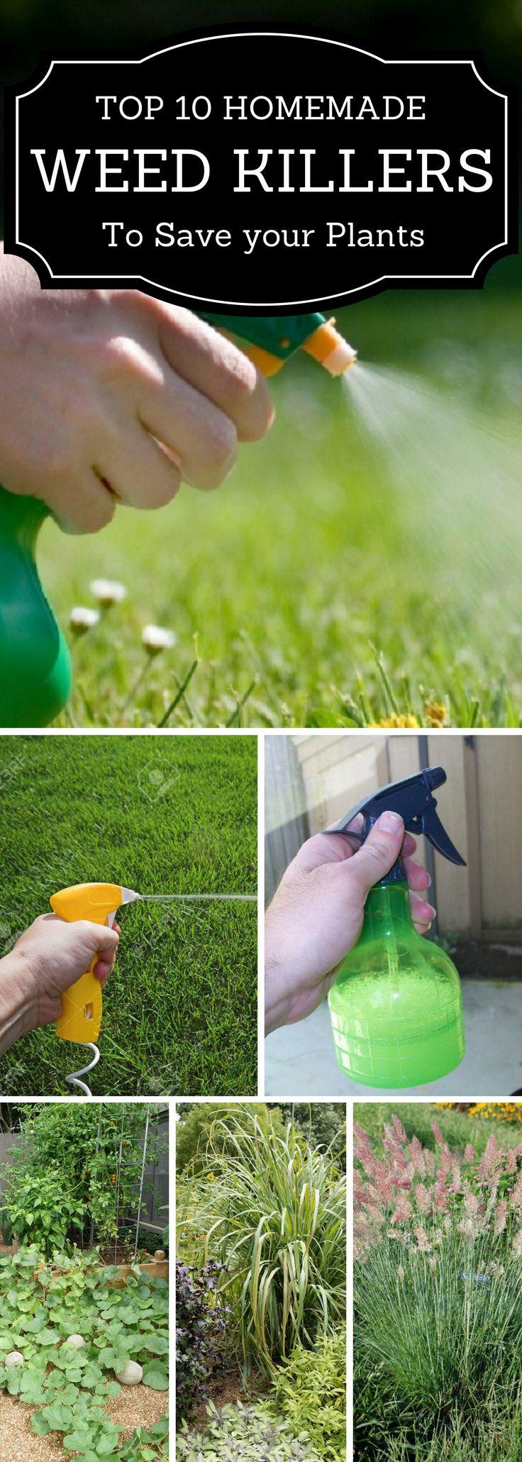 Weeds in flower beds organic killer - Top 10 Organic Homemade Weed Killers