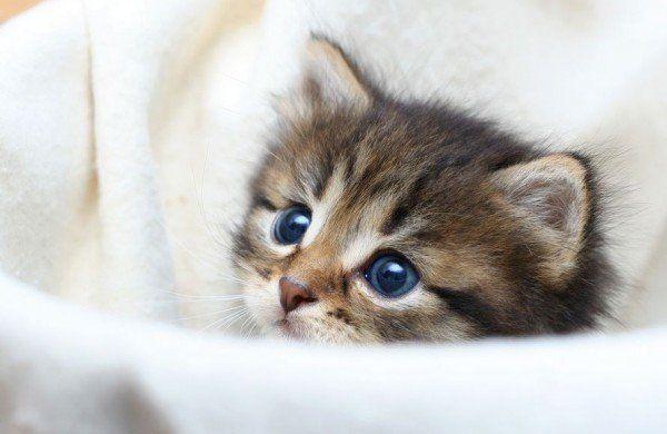 Getigerte Katze Baby Decke Katzen Katzen Getigerte Katze Und
