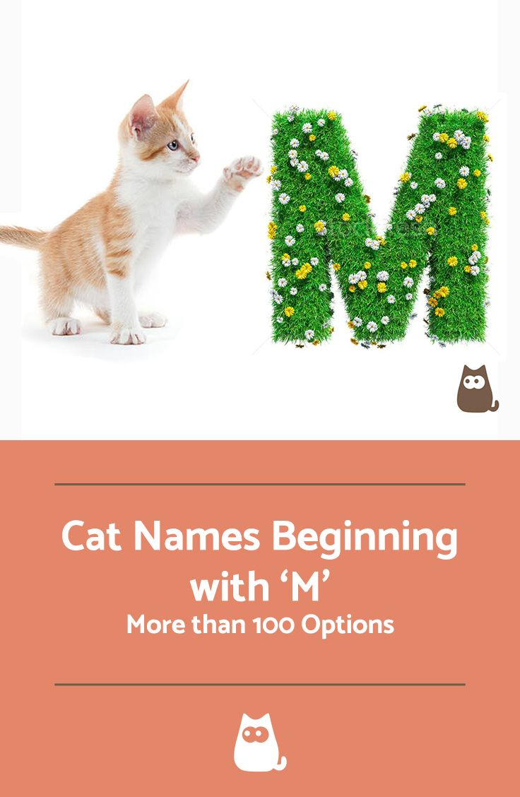 Cat Names Beginning With M Males And Females More Than 100 Cat Names Pet Names List Of Cat Names