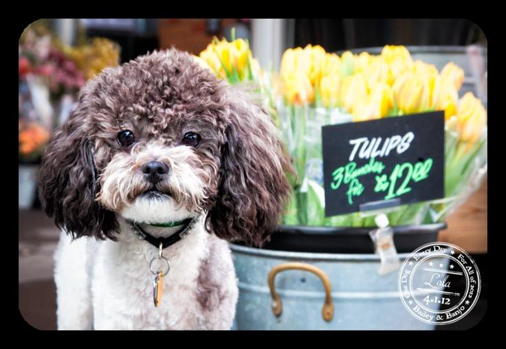 Lola - April 1