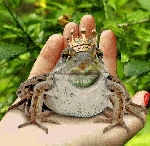 Click LIKE IF you have kissed some frogs before you found your prince!