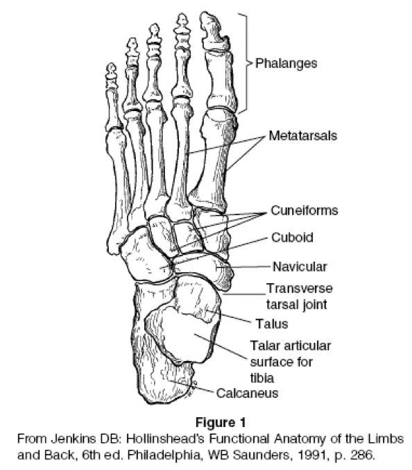 20 best Ankle/ Foot Therapy images on Pinterest | Physical therapy ...
