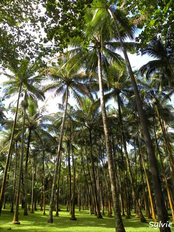 L'Anse des Cascades / Ile de la Réunion