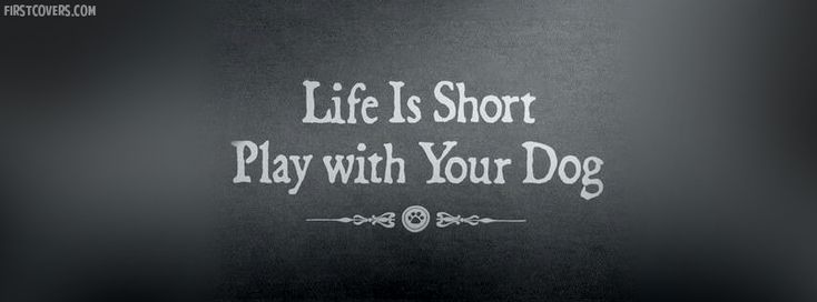 cover: Quotes Facebook, Dogs, Cover Photos, Life Quote, Life Is Short ...