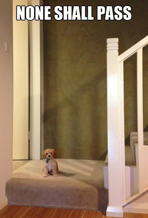 Re-pin this little guard dog then click here to get a coupon