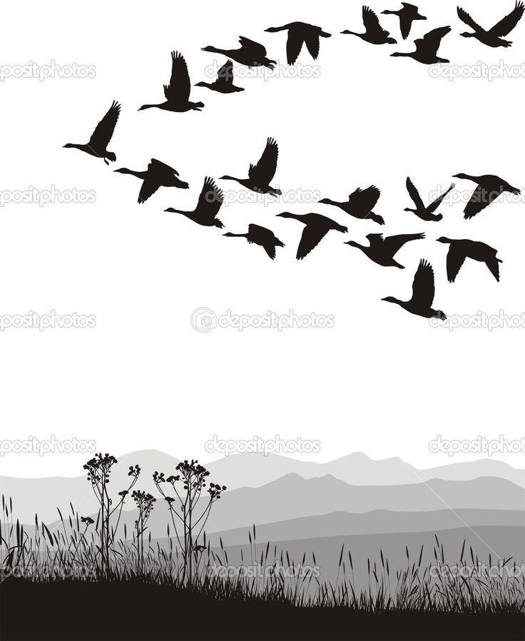 zwart-wit afbeelding van de vliegende ganzen - Stockillustratie: 6420198