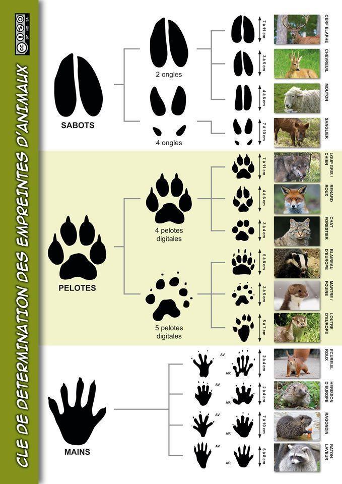 Useful Links In 2020 Animal Tracks Bushcraft Survival Life Hacks
