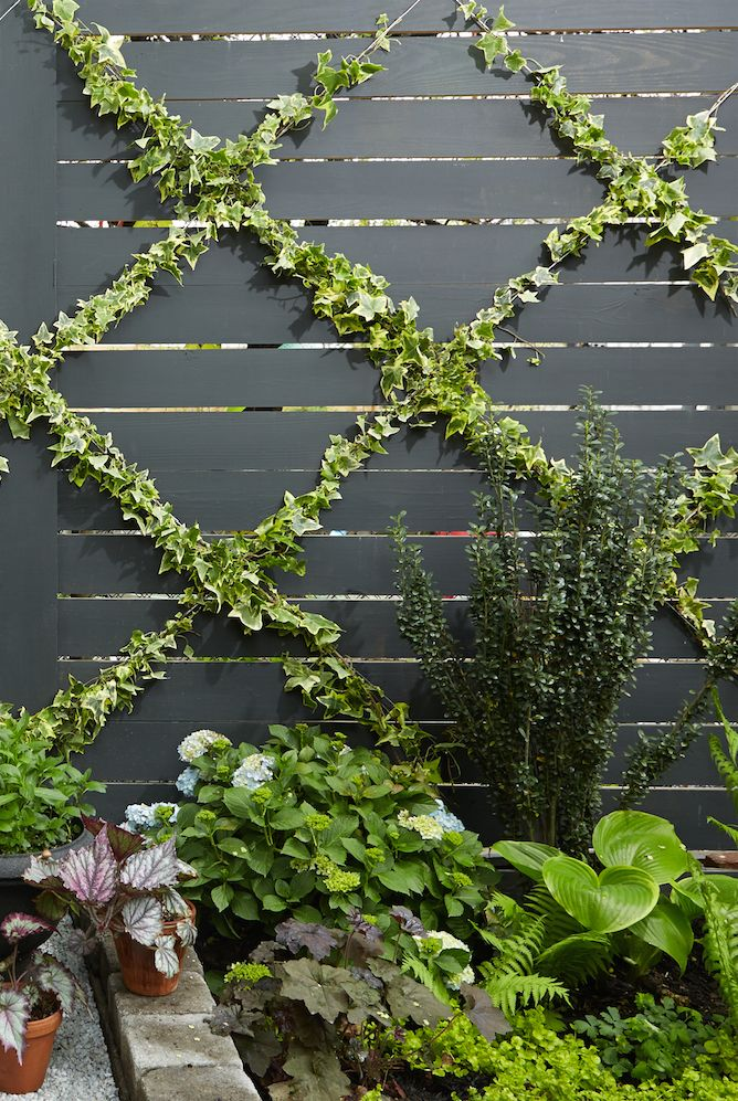 Lush backyard landscape with a vertical ivy-covered trellis.