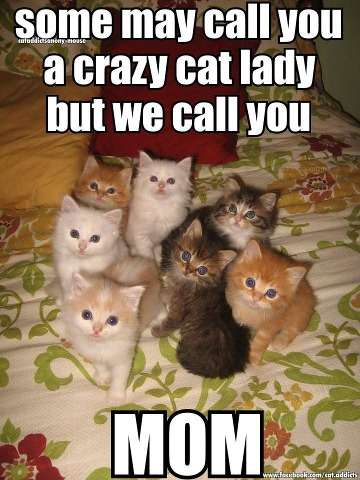 Cats Some may call you a crazy cat lady but we call you