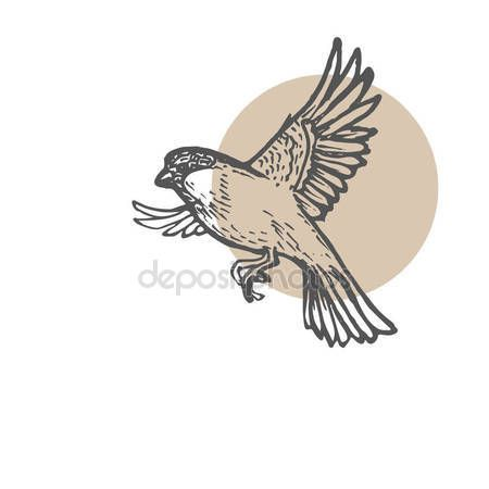 Sparrow birds sketch background. Hand drawn painting illustration. Line art vector drawing.