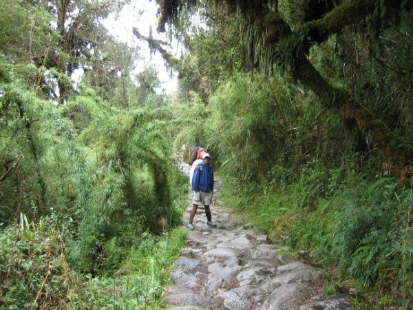Bild vom Inka Trail im Bereich des Bergnebelwaldes.