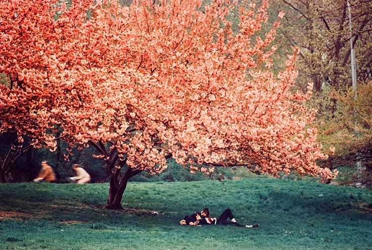 Ernst Haas: Central Park, Spring, 1970