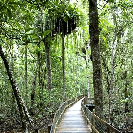 Wet Tropics Qld - Daintree Discovery Centre