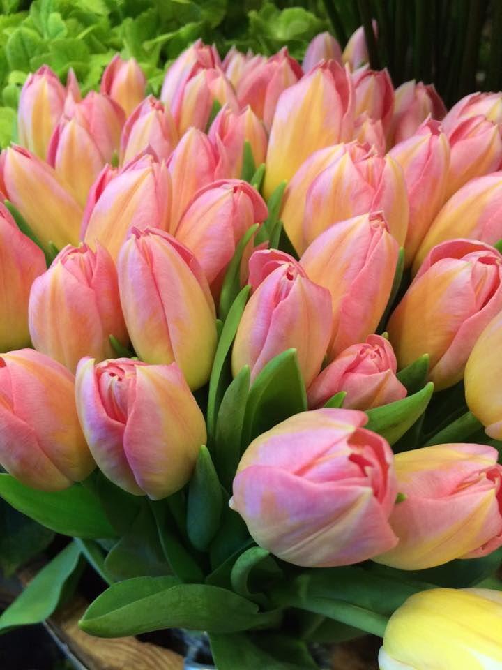 Charming Ivan Bednárik   Flower Shop