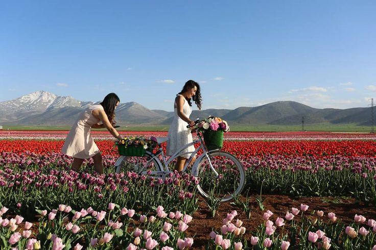 Karaman'ın Kazımkarabekir ilçesinde 50 farklı türden lale yetiştiriliyor. Üretilen 10 milyon lale, yurt içi ve yurt dışına gönderiliyor.