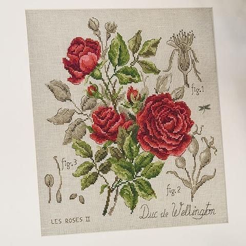 Duc de Wellington Rose kit