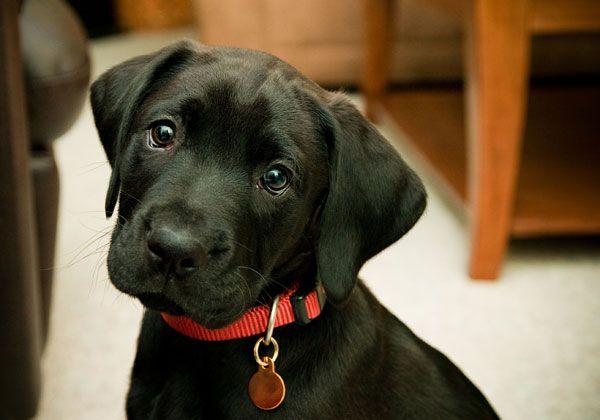 Plaquinha de identificação, placa de identificação, medalha de identificação, medalhinha de identificação. Não importa como você chama, esse item é essencial pra qualquer cão.