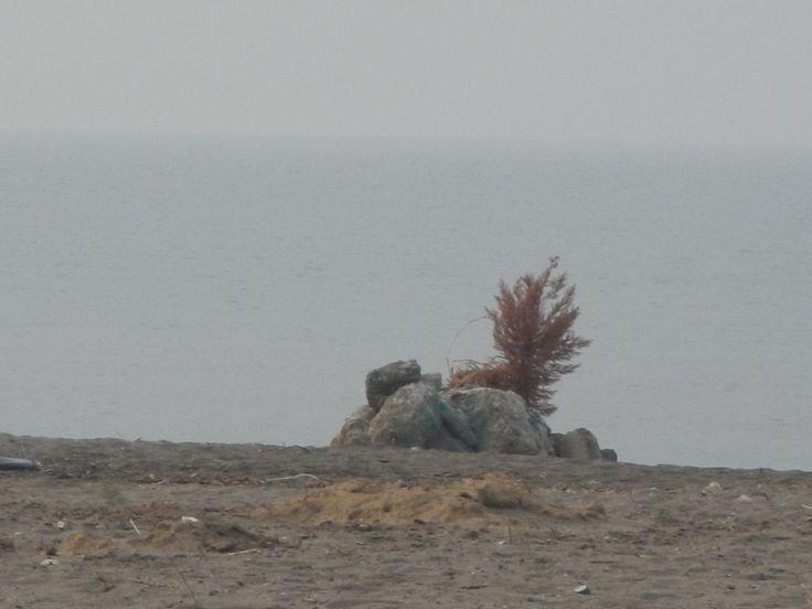 kumsalın demirbaşları . .   :(