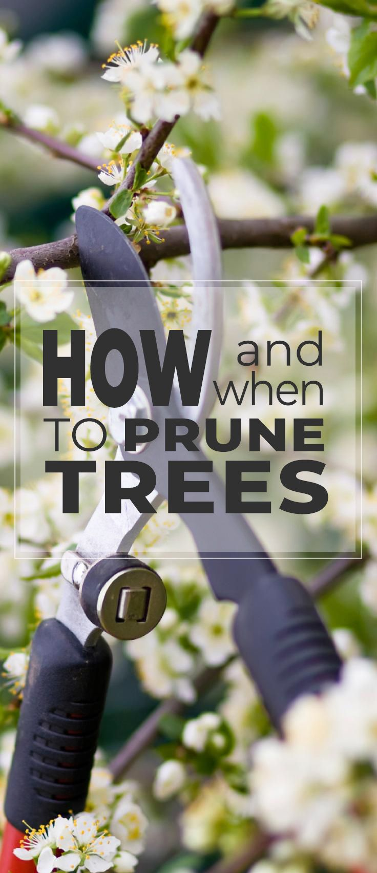 How and When To Prune Trees! • After reading this post, you will know how to prune trees correctly! We also give you specific tips on how to prune fruit trees! #howtoprunetrees #whentoprunetrees #DIYtreepruning #treepruning #howtoprunefruittrees #whentoprunefruittrees