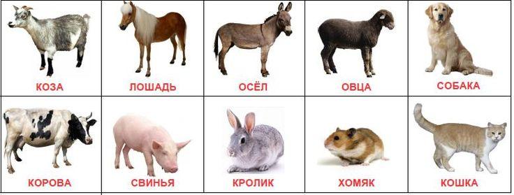 """Карточки Домана """"Домашние животные"""" скачать"""