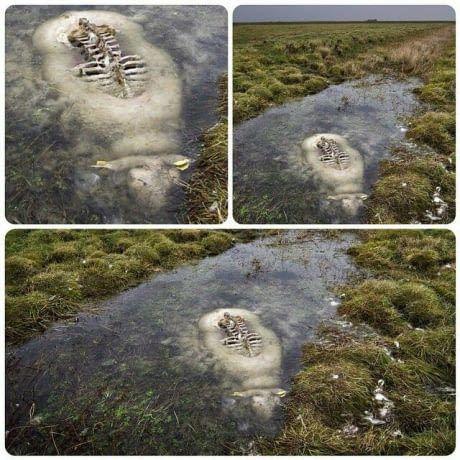 oveja se conserva en rio helado