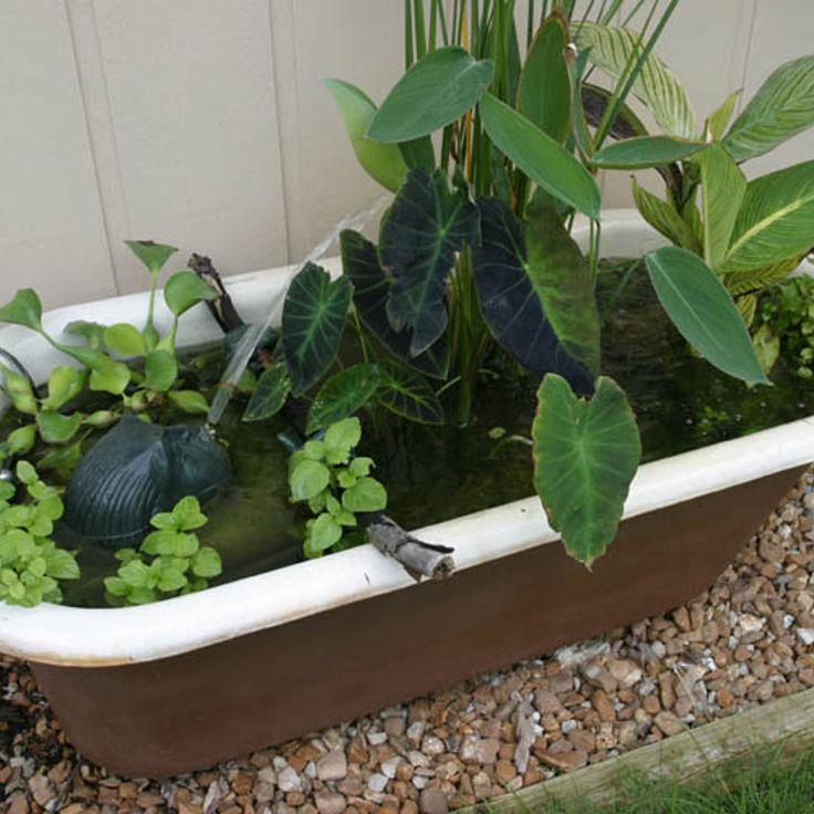 Ponds Aquatic Best Plants
