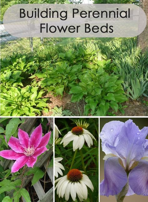 Building perennial flower beds perennials yards and plants for Low maintenance perennial flower bed