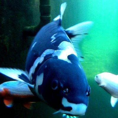 Aquarium Fish Prices
