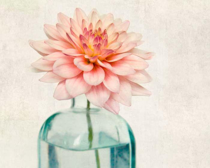 "Fine Art Flower Photography Print """"Pink Dahlia No. 1"""""