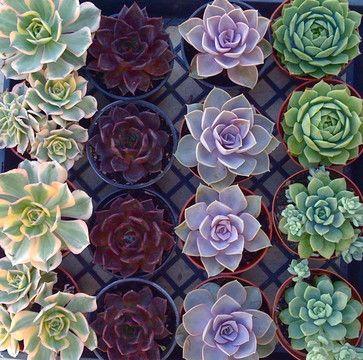 Beautiful Echeveria eclectic indoor pots and planters