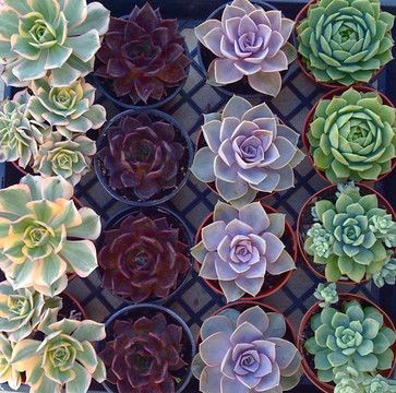 Beautiful Echeveria eclectic indoor pots and planters