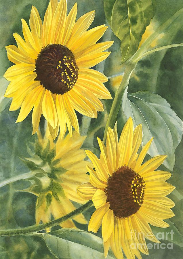 Wild Sunflowers Painting by Sharon Freeman - Wild Sunflowers Fine Art Prints and Posters for Sale
