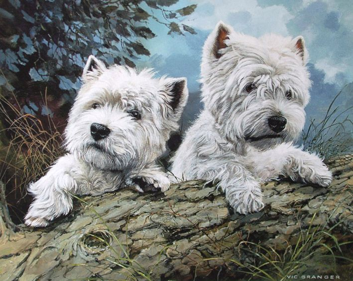 """West Highland White Terriers Limited Edition Print by Canine Artist Vic Granger - 15"""" x 12"""" 500 prints - no longer available ..... bugger!"""