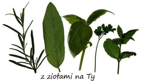 Najczęstsze pytania dotyczące Ziół oraz miany sposobu myślenia o ziołolecznictwie na przestrzeni lat. prof Enji